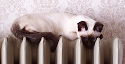 Siamese Cat on Radiator