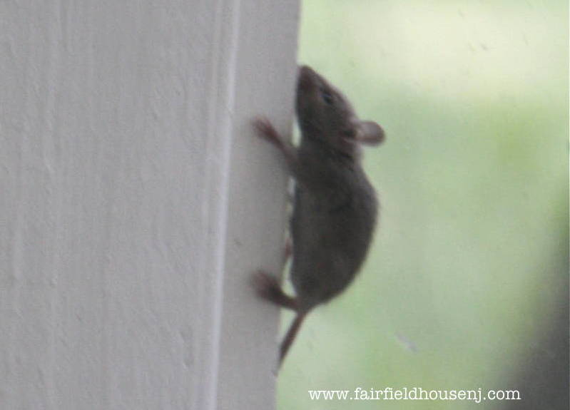 Mouseguest | The Fairfield House