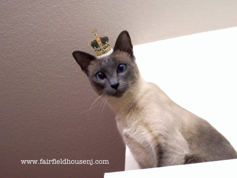 Crowned Siamese 'Puter