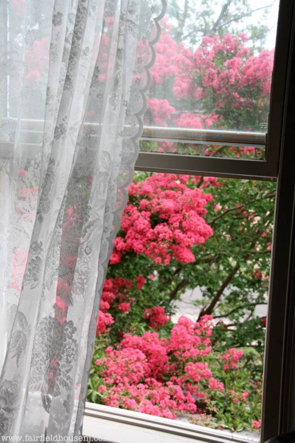 Window Myrtles