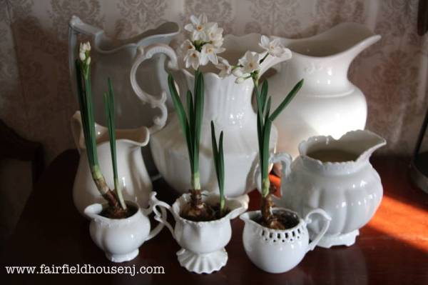 paperwhites in ironstone